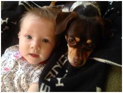 SLS Consulting Pets