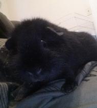 SLS Consulting Pet